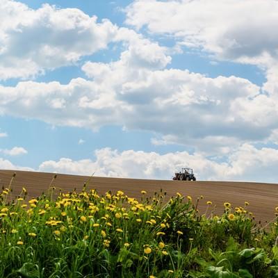 「美瑛の耕す畑と青空」の写真素材