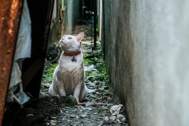 路地裏の老猫の写真