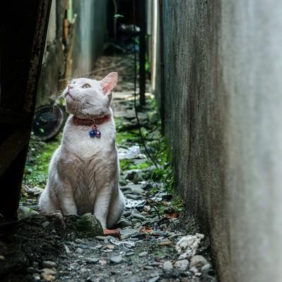 「路地裏の老猫」の写真素材