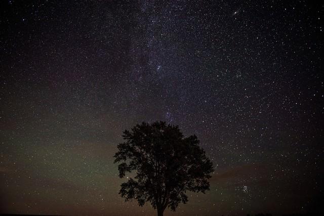 美瑛の木と星空の写真