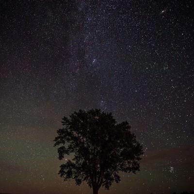 「美瑛の木と星空」の写真素材