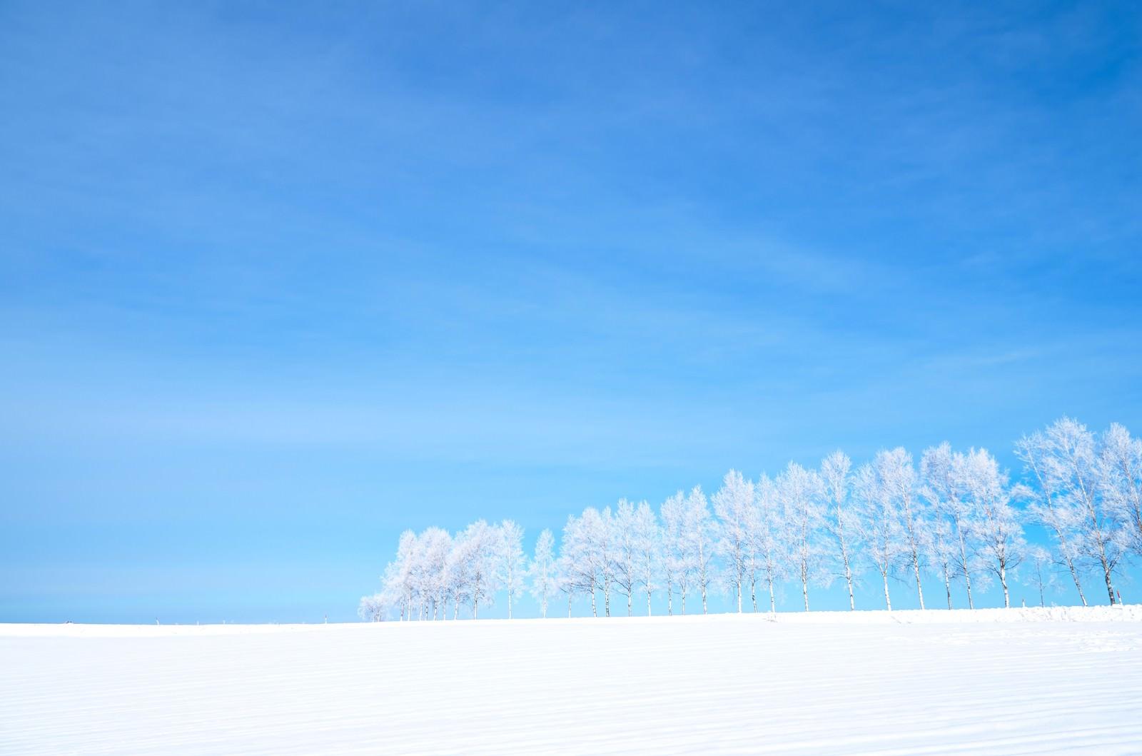 「雪原と霧氷」の写真
