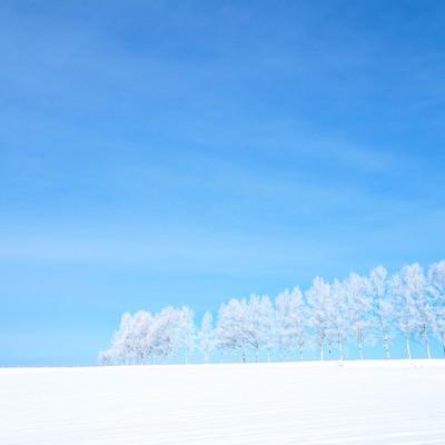 「雪原と霧氷」の写真素材