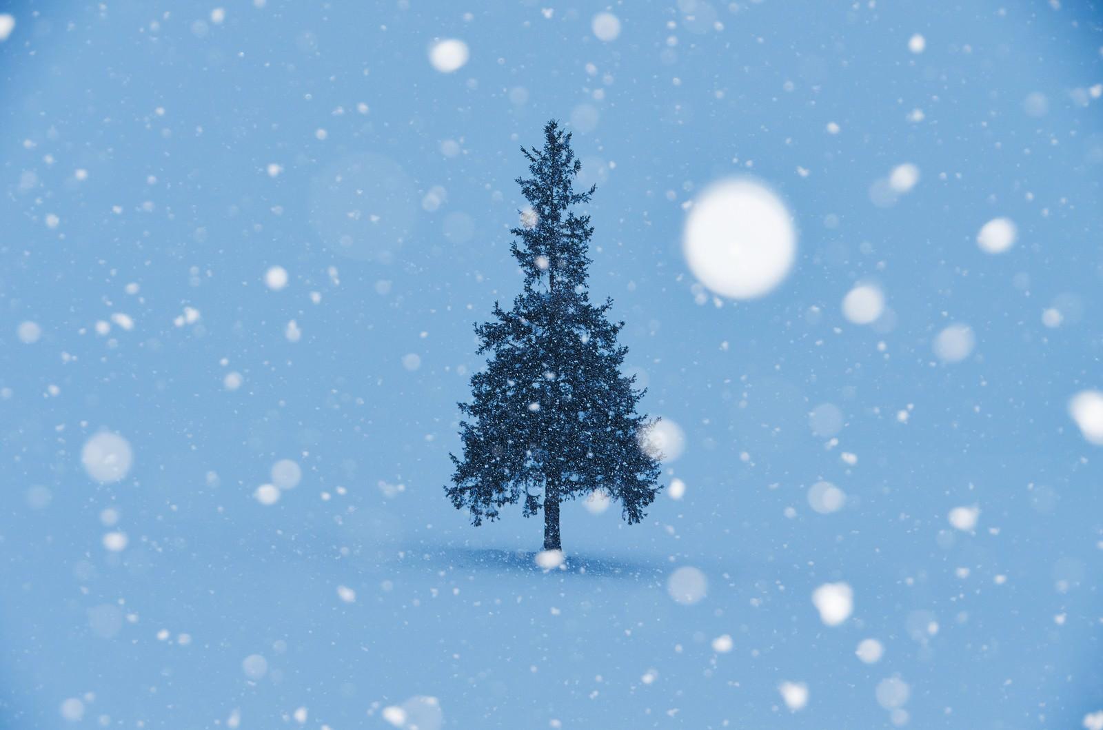 「雪降るクリスマスツリー雪降るクリスマスツリー」のフリー写真素材を拡大