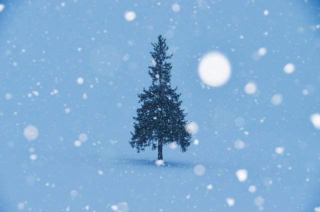 雪降るクリスマスツリーの写真