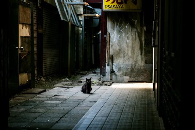 路地裏のクロネコの写真