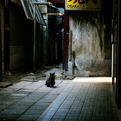 「路地裏のクロネコ」の写真素材