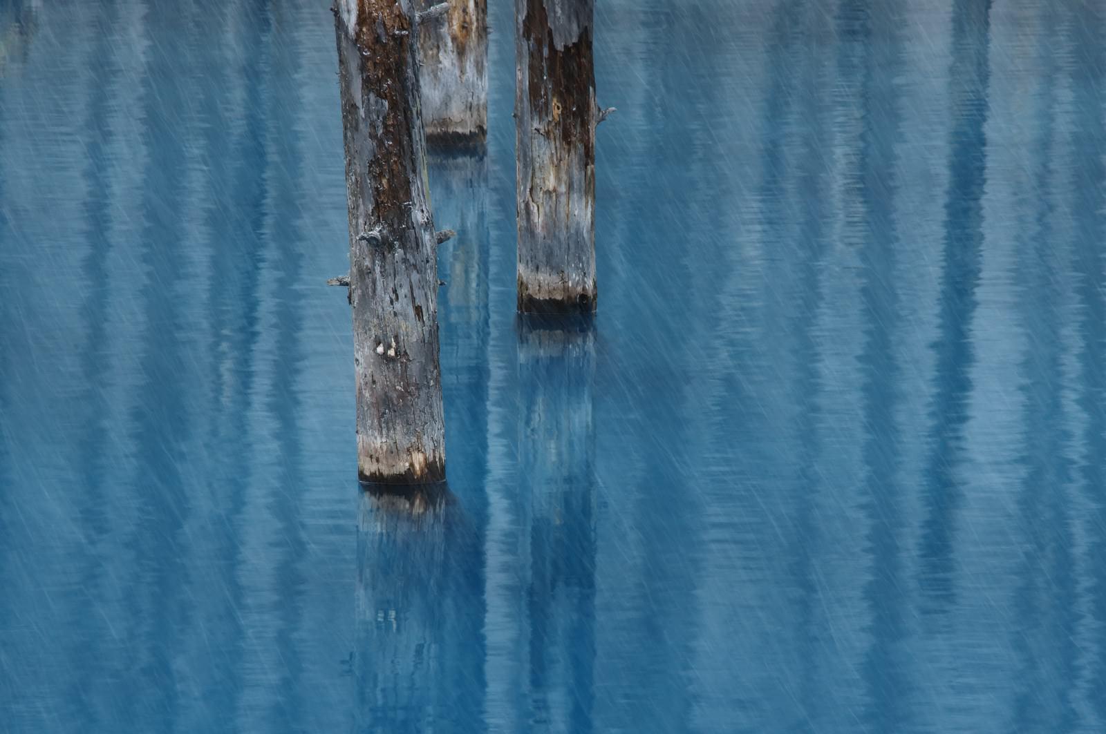 「雨が降る美瑛町白金の青い池」の写真