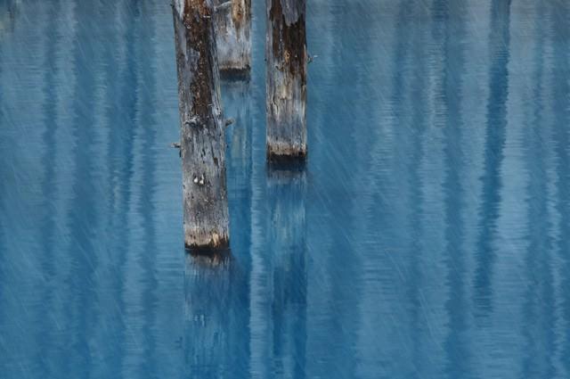 雨が降る美瑛町白金の青い池の写真