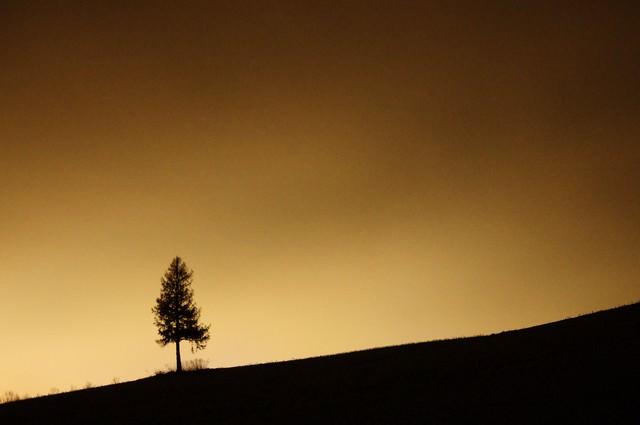 夕暮れのグラデーションと美瑛の丘の写真