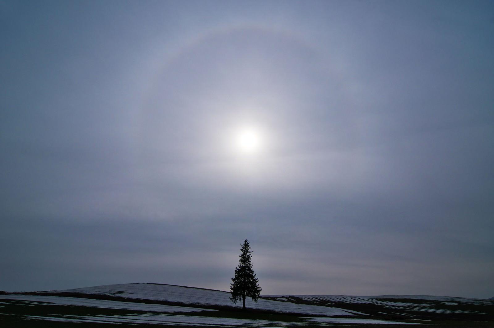 「美しい自然現象「日輪」と美瑛の一本の木」の写真