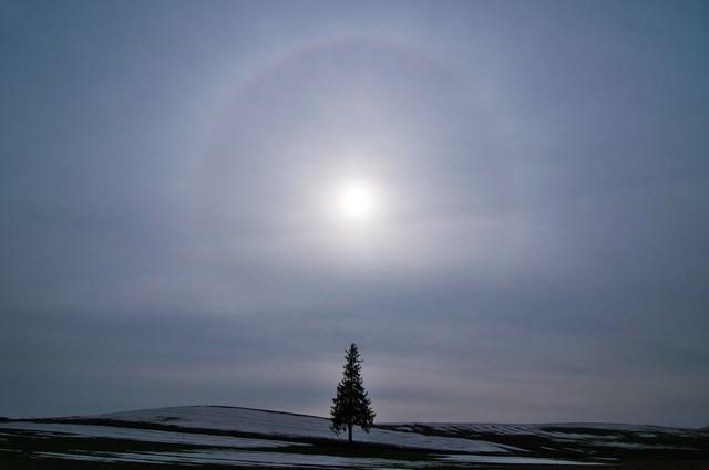美しい自然現象「日輪」と美瑛の一本の木の写真