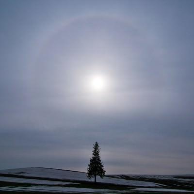 「美しい自然現象「日輪」と美瑛の一本の木」の写真素材