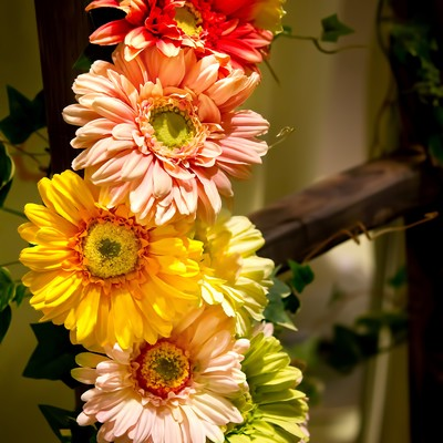 「ハシゴにかかる花」の写真素材