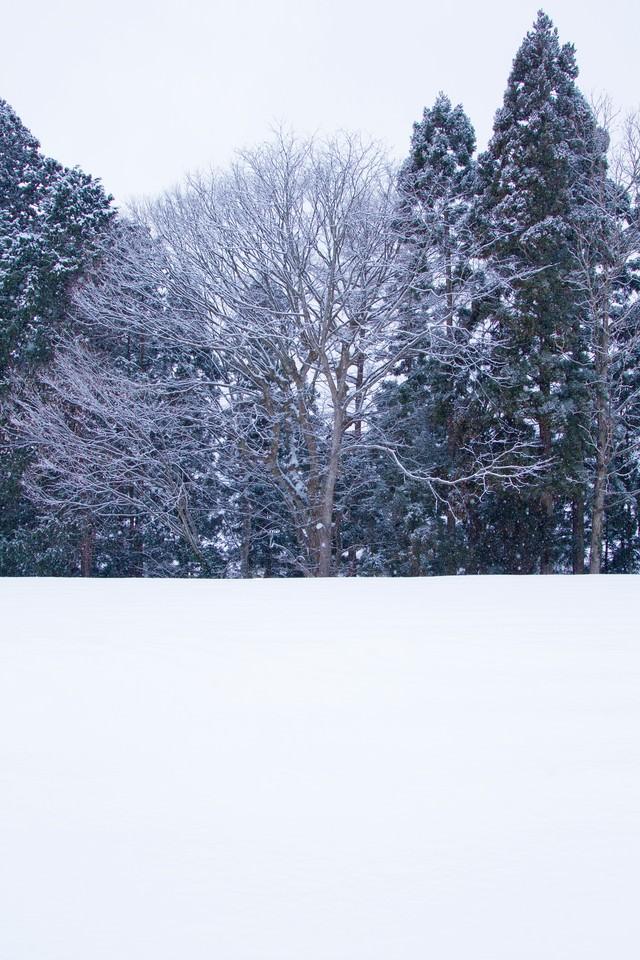 雑木林と雪景色の写真