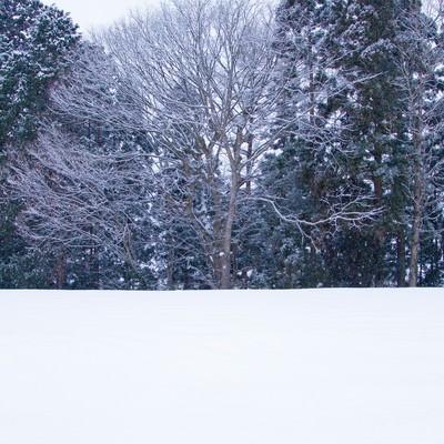 「雑木林と雪景色」の写真素材