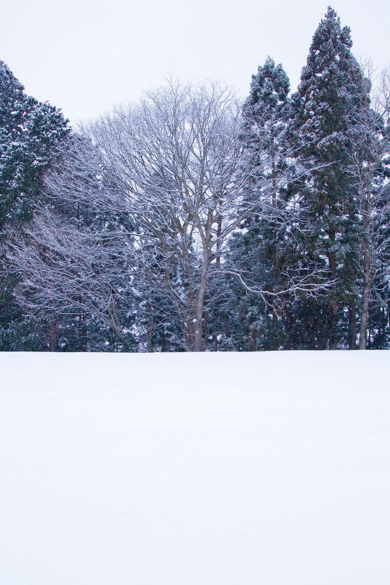 「雑木林と雪景色」の写真