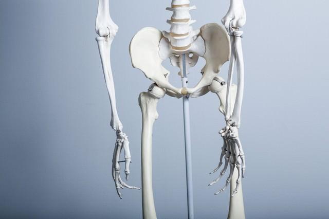 骨盤の歪み(人体骨格模型)の写真