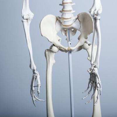 「骨盤の歪み(人体骨格模型)」の写真素材