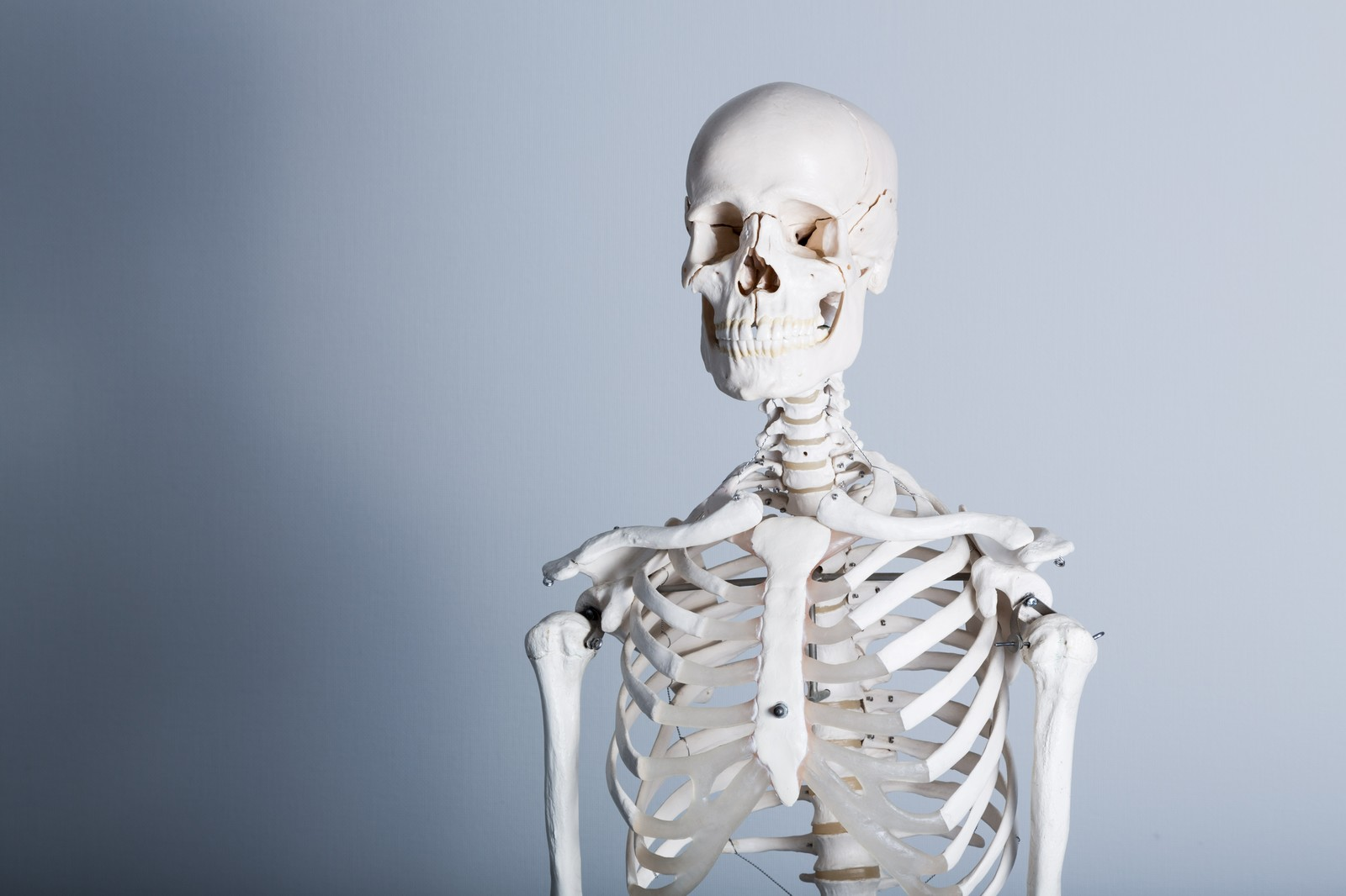 「骨格標本」の写真