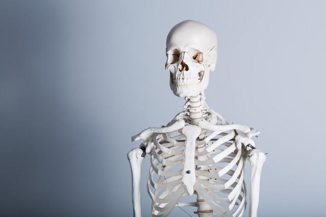 骨格標本の写真