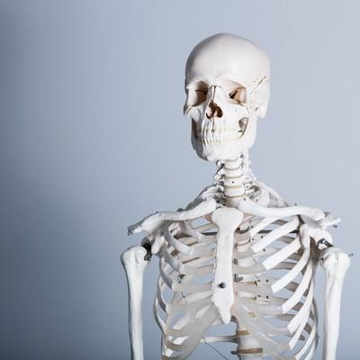 「骨格標本」の写真素材