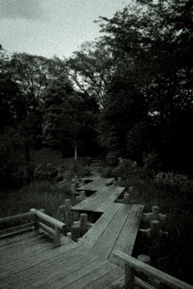 池の遊歩道(ノイズ)の写真
