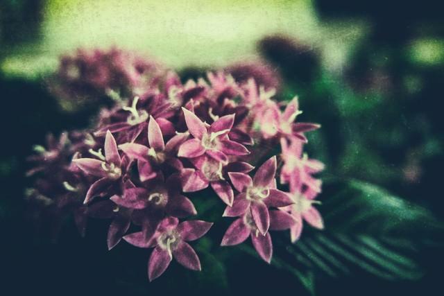 フィルム写真の花の写真
