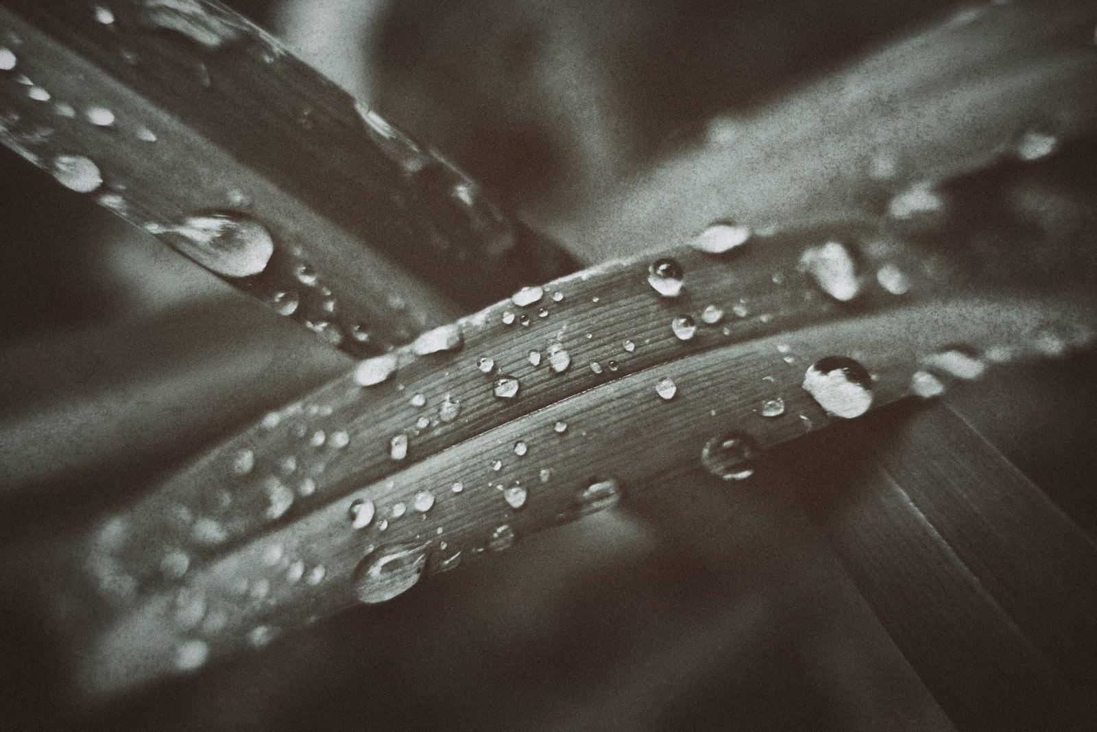 「水滴と植物の葉」の写真