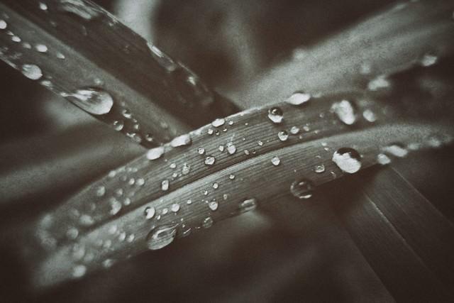 水滴と植物の葉の写真