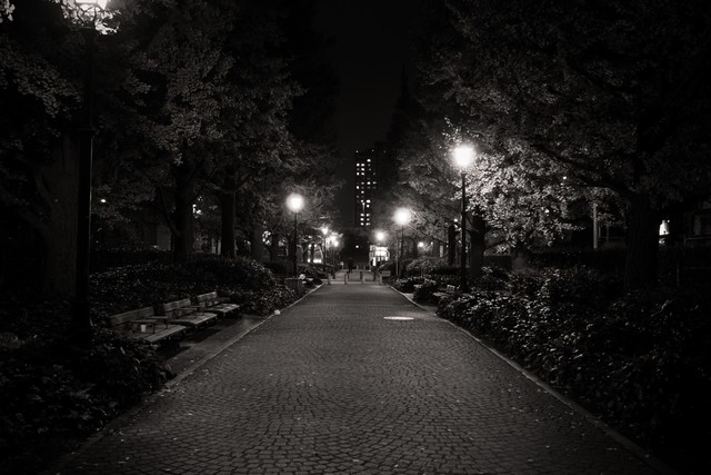 街灯のあかりと歩道の写真