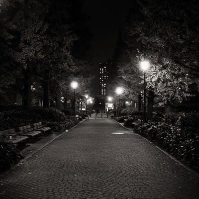 「街灯のあかりと歩道」の写真素材