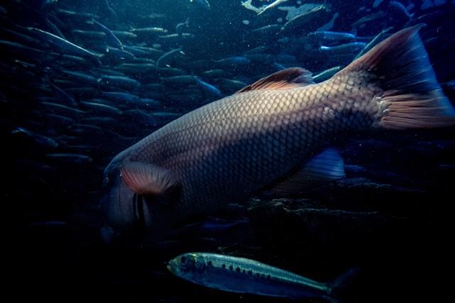 水槽の魚達の写真