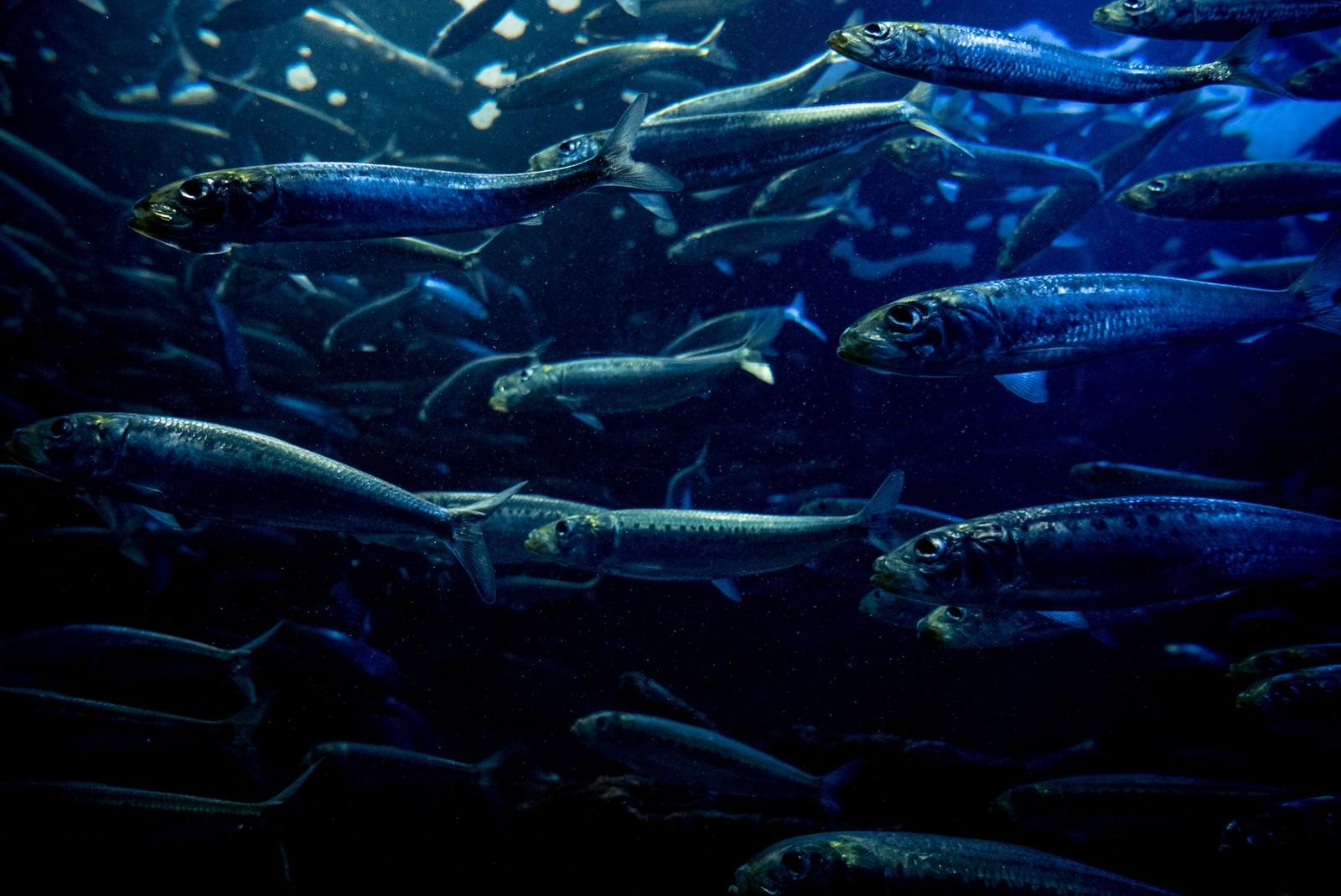 「魚の群れ」の写真