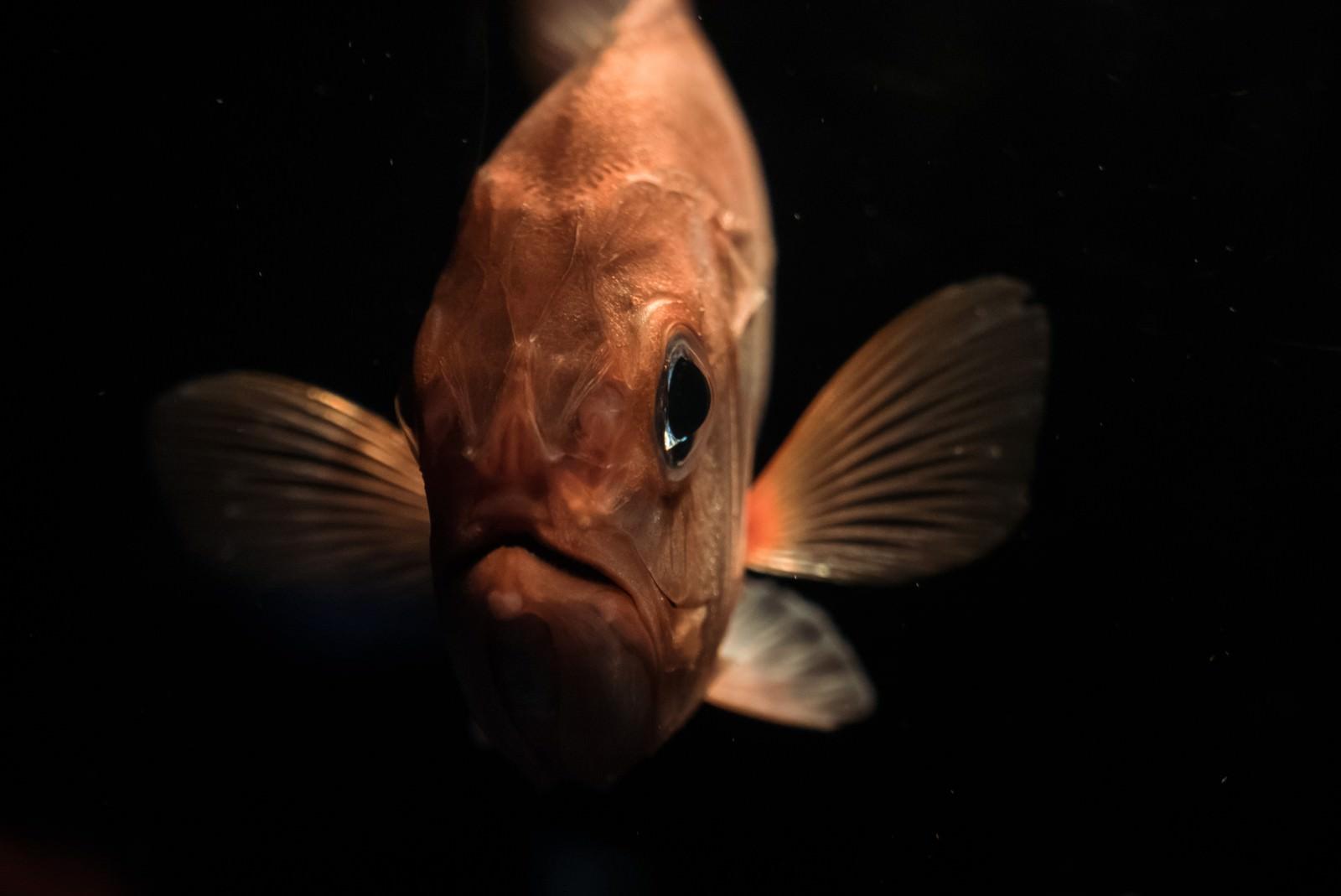 「深海魚コワい」の写真