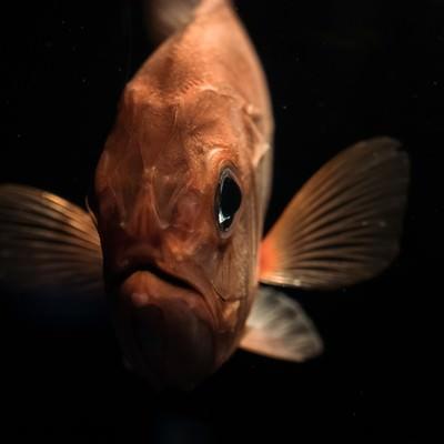 「深海魚コワい」の写真素材