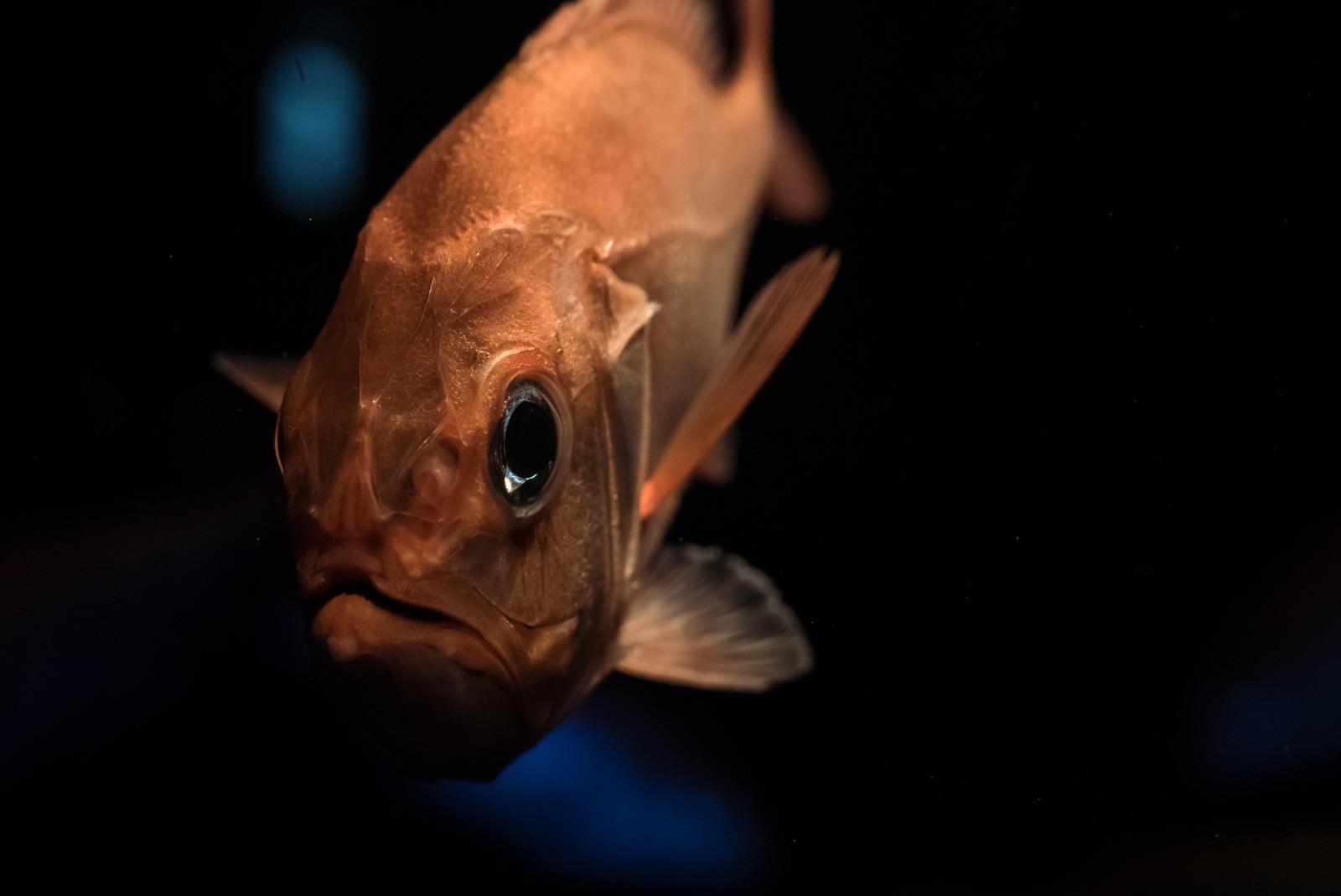 「深海魚」の写真