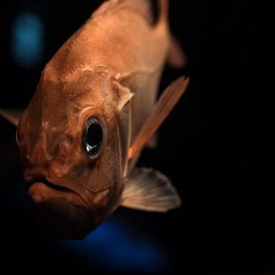 「深海魚」の写真素材