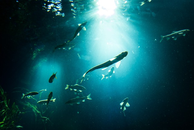 日の光と魚のシルエットの写真