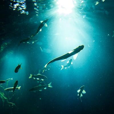 「日の光と魚のシルエット」の写真素材