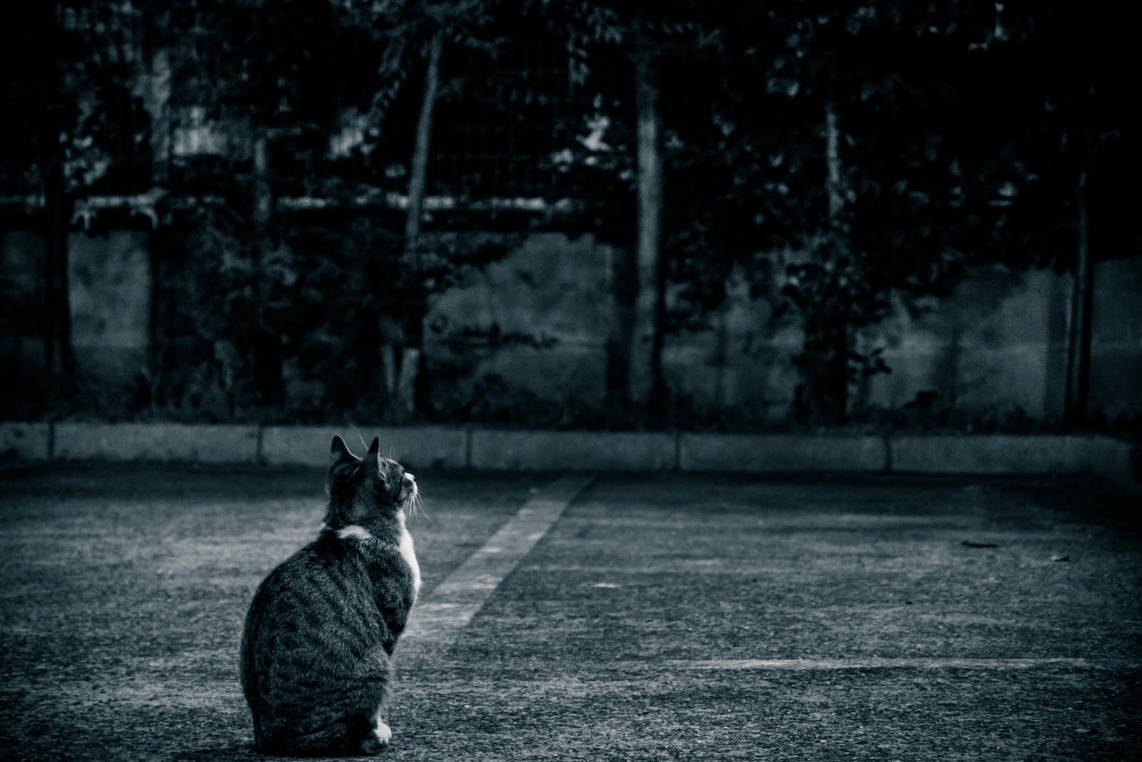 「忠猫忠猫」のフリー写真素材を拡大