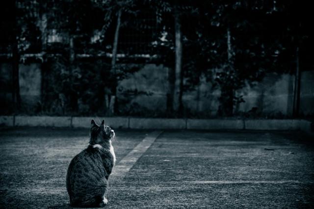 忠猫の写真