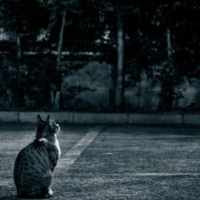 「忠猫」の写真素材