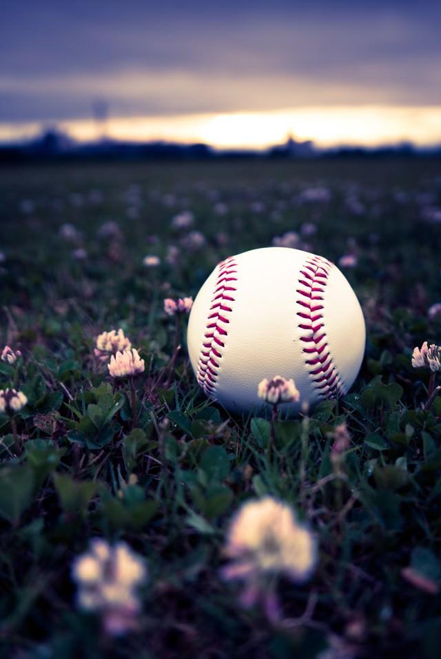 河川敷に転がる野球のボールの写真