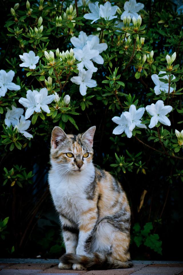 お花と猫ちゃんの写真