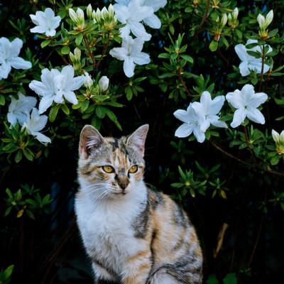 「お花と猫ちゃん」の写真素材