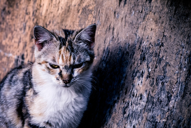 クールにキメる猫の写真