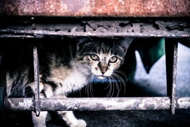 やせ細った野良猫の写真