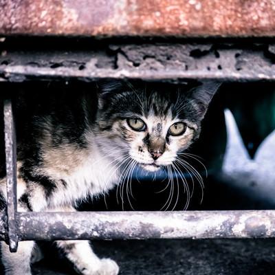 「やせ細った野良猫」の写真素材