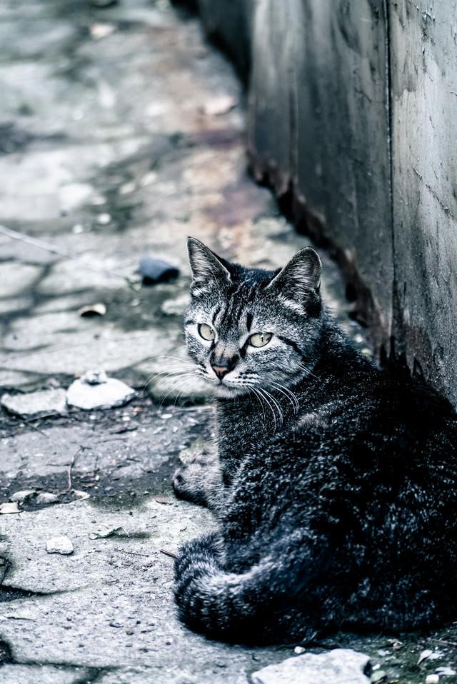 振り返る野良猫の写真
